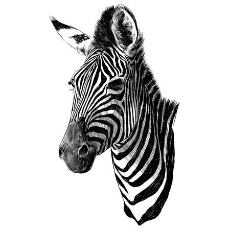 Zebra hoofd schets grafisch ontwerp.