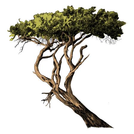 아프리카 나무 스케치 그래픽 디자인입니다.