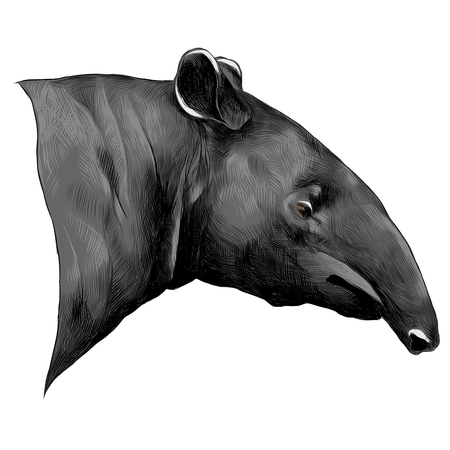 Aardvark 스케치 그래픽 디자인입니다.