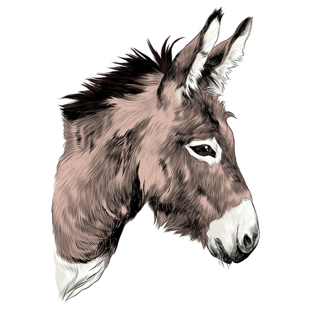 Donkey sketch graphic design. Stock Illustratie