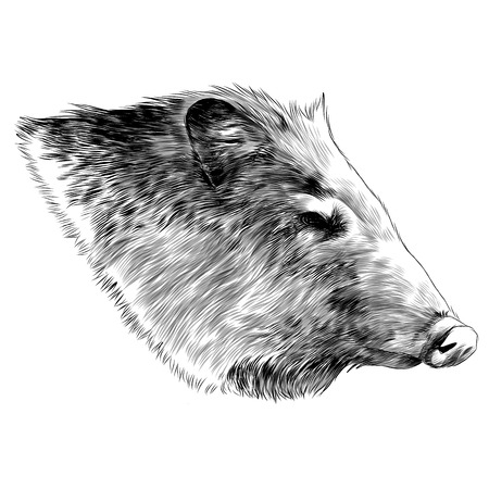 멧돼지 머리 스케치 그래픽 디자인입니다.