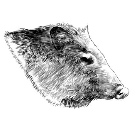 Boar head sketch graphic design.