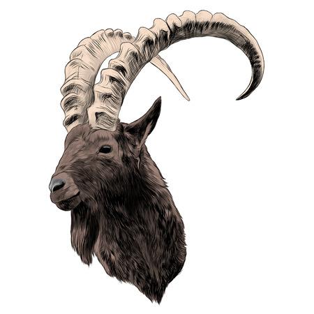 ヤギのスケッチグラフィックデザイン。
