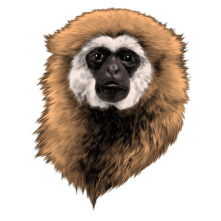 Gibbon monkey sketch graphic design.
