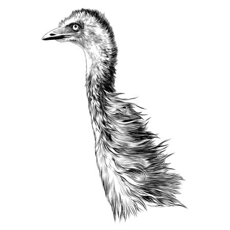 Struisvogel schets grafisch ontwerp. Stock Illustratie