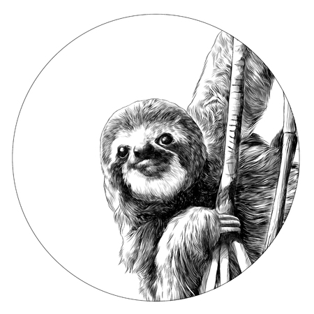 Sloth sketch graphic design. Vettoriali