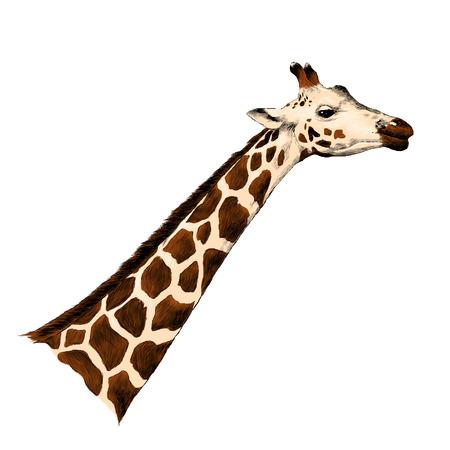 Giraffe head sketch graphic design. Çizim