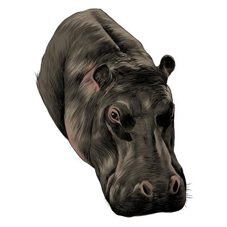 Hippo conception graphique de croquis Banque d'images - 91603650