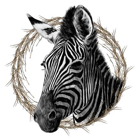 Zebra head framed sketch graphic design.