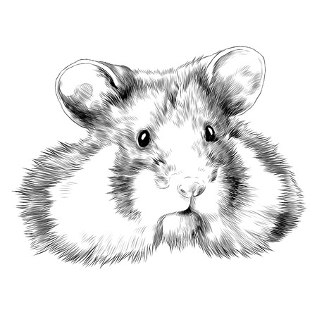 Hamster sketch graphic design.