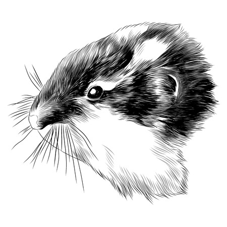 Hamster lemming head sketch graphic design.