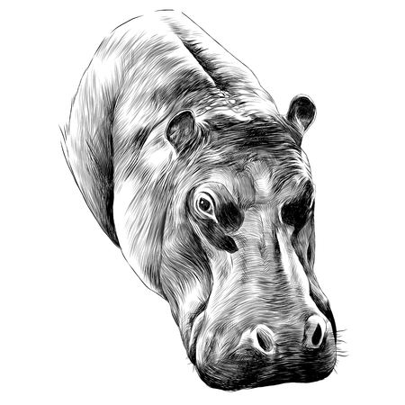 Hippo-Skizze-Grafik-Design. Standard-Bild - 91603919