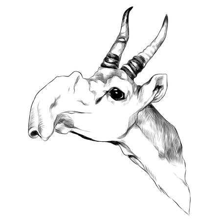 Antilope hoofdschets grafisch ontwerp. Stock Illustratie
