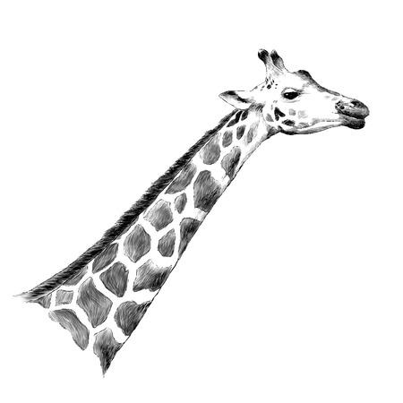 Giraffe head sketch graphic design. Stock Illustratie