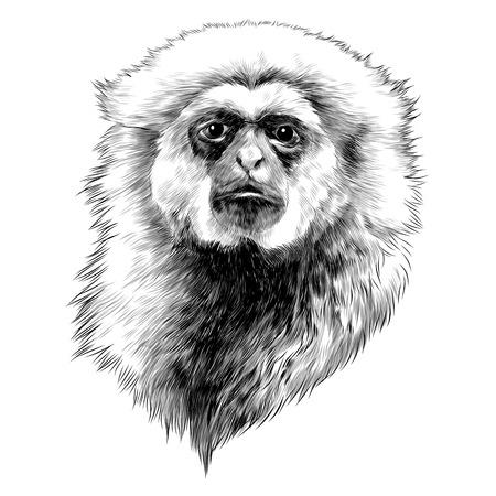 ギボン猿スケッチグラフィックデザイン。