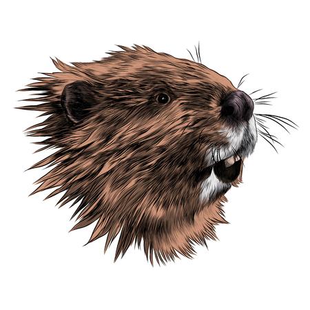 Beaver sketch graphic design.
