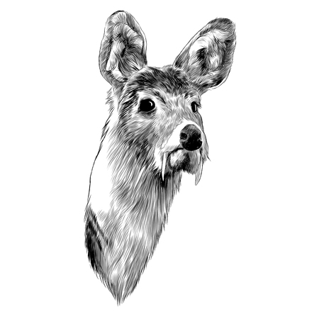 Musk deer sketch graphic design.