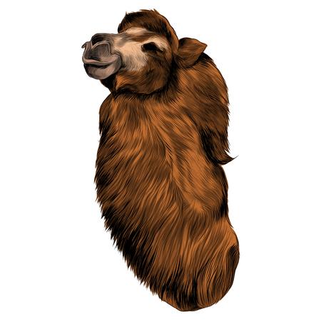 Camel sketch graphic design.
