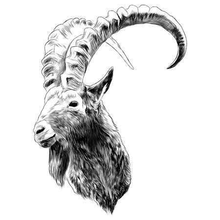 Projekt graficzny szkicu kozy. Ilustracje wektorowe