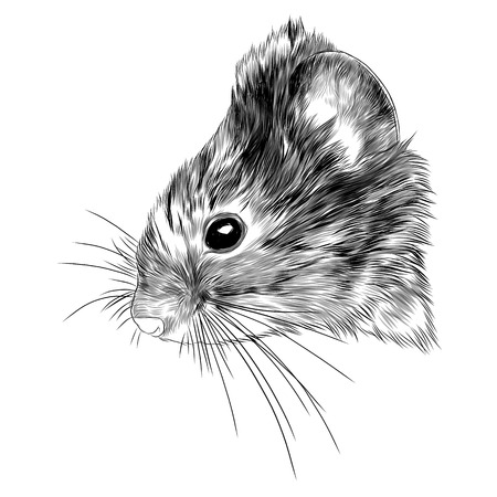 Mouse vole head sketch graphic design. Illustration