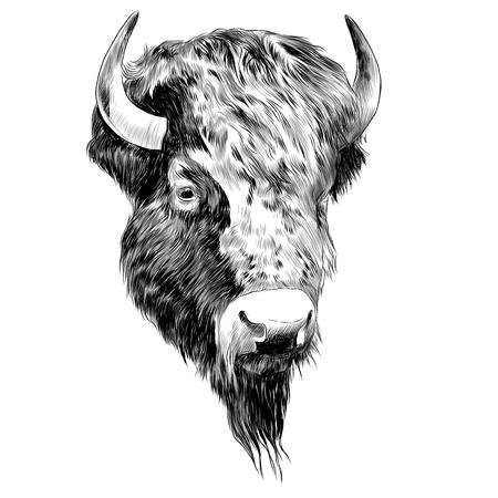 Bison sketch graphic design. Stock Illustratie