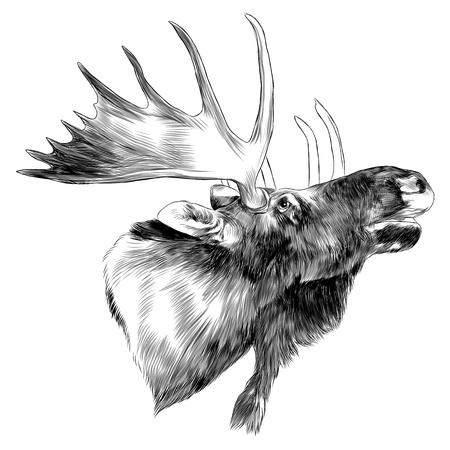 Elk head sketch graphic design.