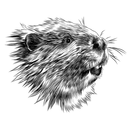 Beaver sketch graphic design.