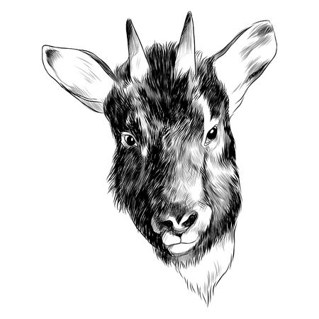 Goral 염소 스케치 그래픽 디자인입니다. 스톡 콘텐츠 - 91604256