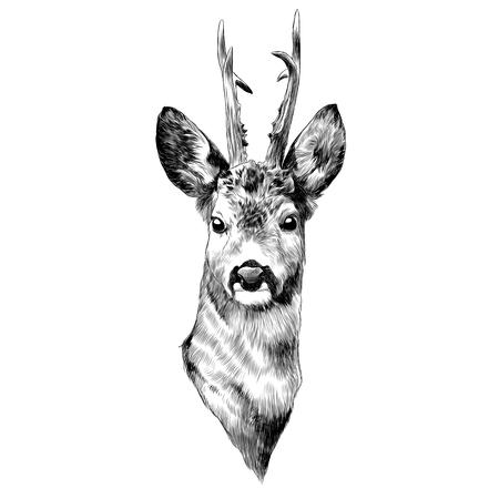 鹿のスケッチグラフィックデザイン。