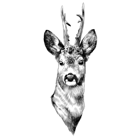 Deer sketch graphic design.