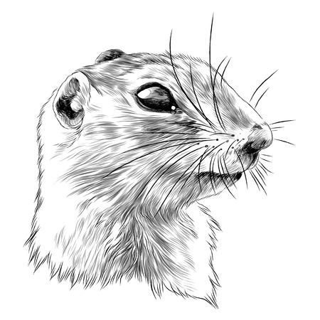 Gopher szkic projektu graficznego. Ilustracje wektorowe
