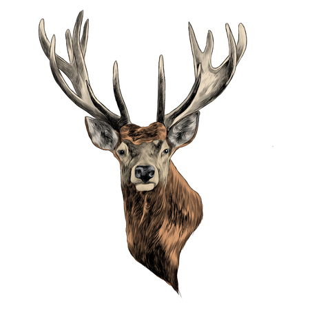 Stag deer head sketch graphic design. Vectores