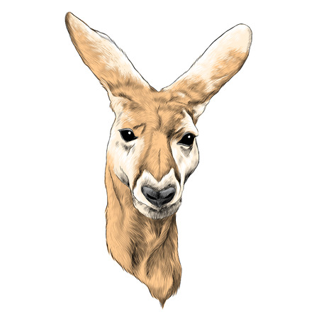 Kangaroo sketch graphic design.