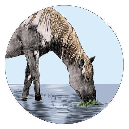 말 머리 스케치 그래픽 디자인입니다.