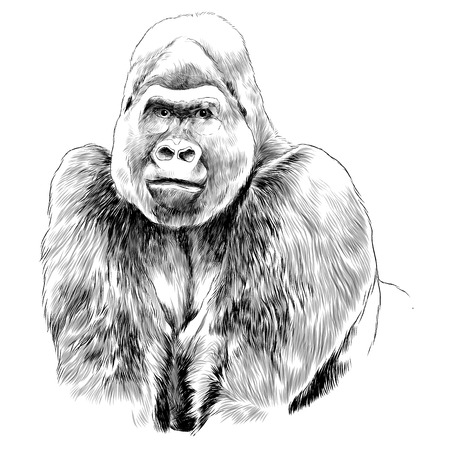 Gorilla sketch graphic design. 版權商用圖片 - 91604376