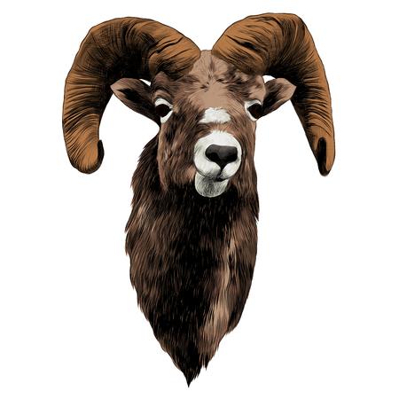 Sheep sketch graphic design. Ilustração