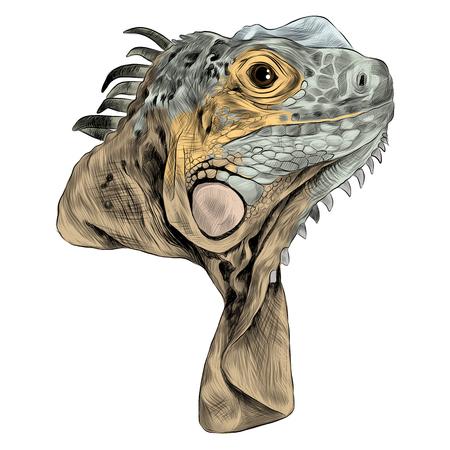 Iguana schets grafisch ontwerp.