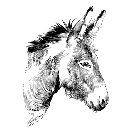 Donkey sketch graphic design. Stock Illustratie