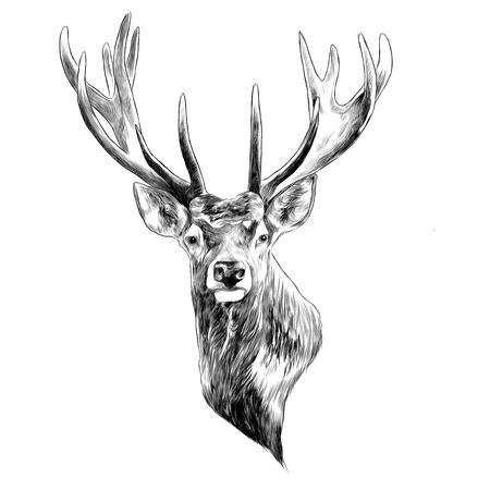 Stag deer head sketch graphic design. Illustration