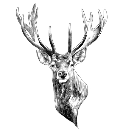 Stag deer head sketch graphic design. Çizim