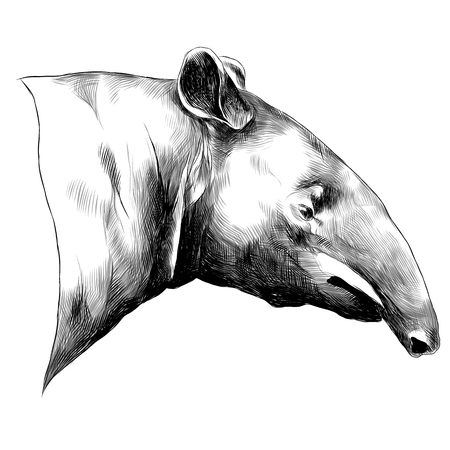 Aardvark sketch graphic design.