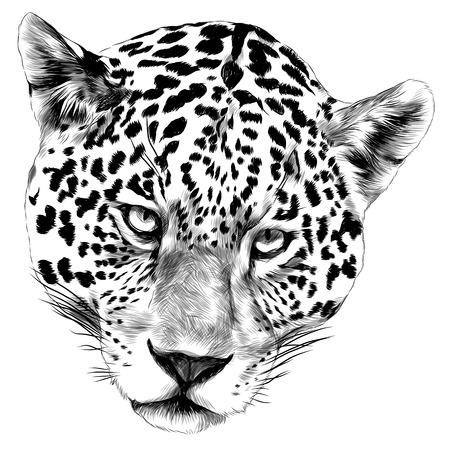 Jaguar head sketch vector graphics monochrome black-and-white drawing Vettoriali