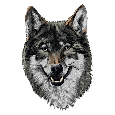 ウルフヘッドスケッチベクトルグラフィックスカラー画像