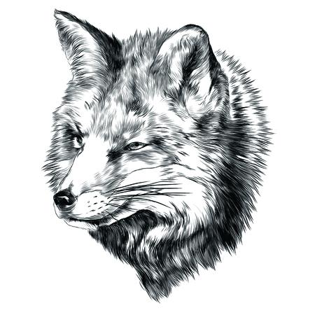 Fox sketch graphic design. Ilustrace