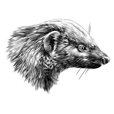 Civet Mungo sketch graphic design.