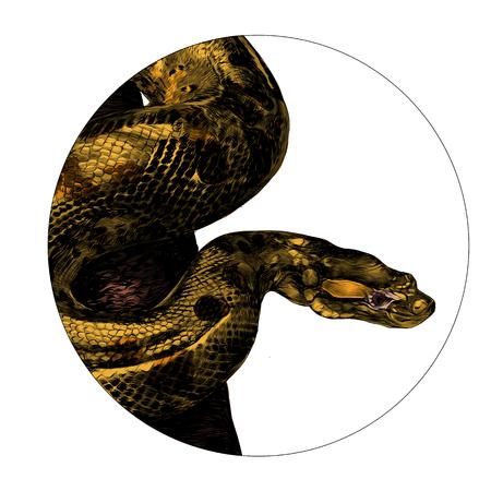 Anaconda schets grafisch ontwerp.