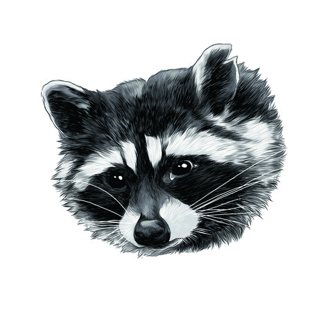 Raccoon sketch graphic design.