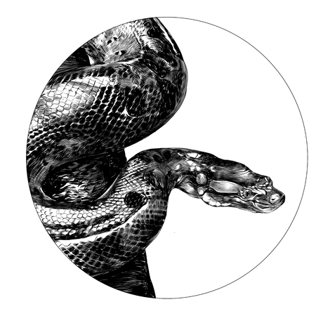 Anaconda sketch graphic design. Иллюстрация