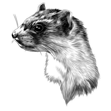 Ferret head sketch graphic design.