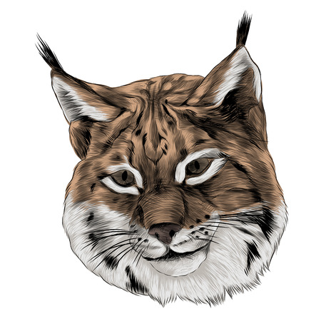 Lynx head sketch graphic design. Çizim